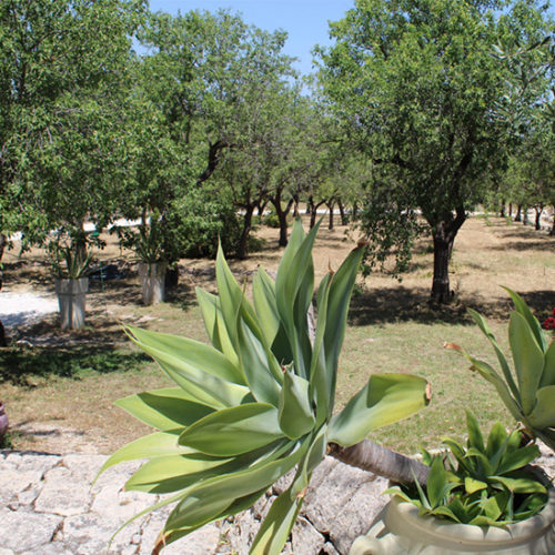 Agriturismo Terre di Vendicari